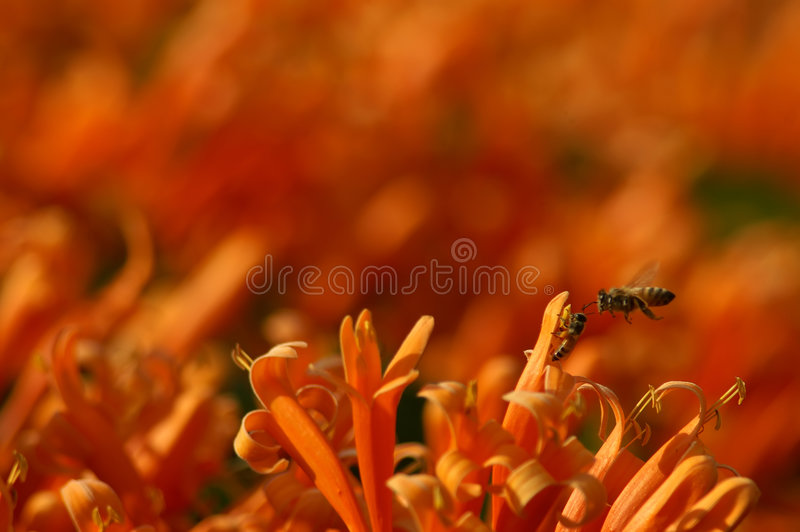 kwiaty pomarańczy obraz stock