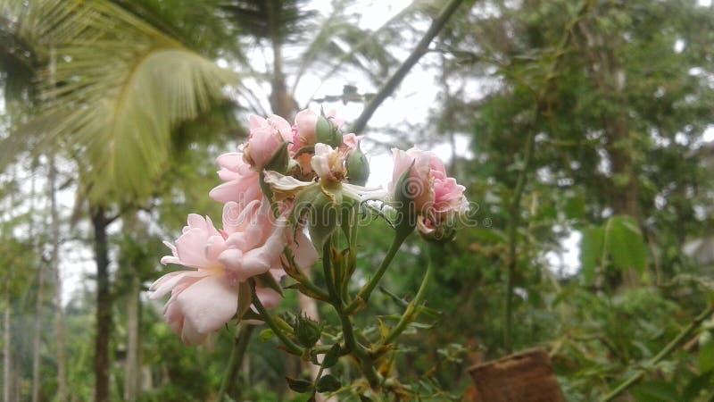 Kwiaty przy latem obraz stock