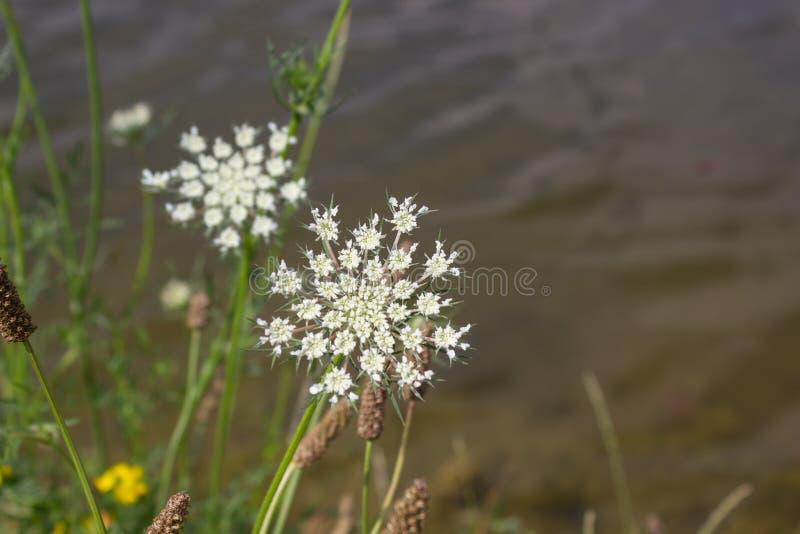 Kwiaty przy morzem zdjęcie royalty free