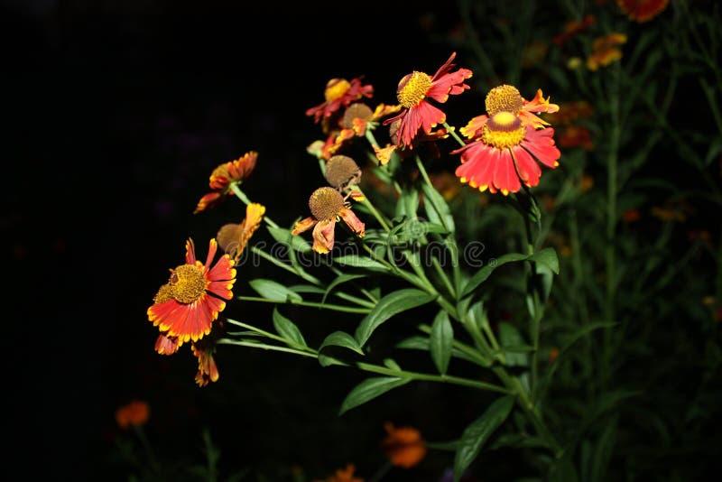 Kwiaty przy nocą zdjęcia royalty free