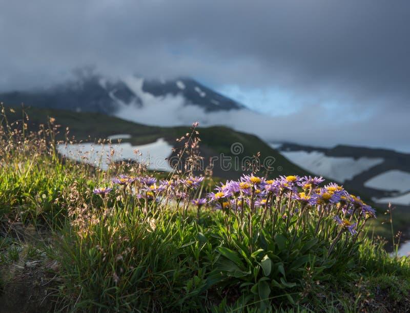Kwiaty przy stopą wulkan fotografia stock