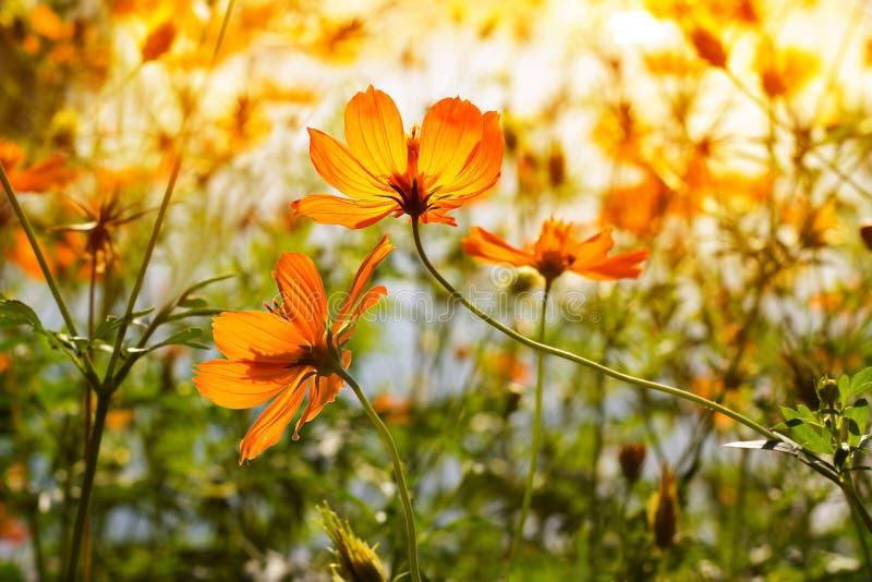 Kwiaty przy wschodem słońca w parku fotografia stock
