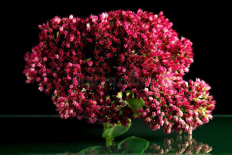 Kwiaty przyrody fantastyczny piękno fotografia stock