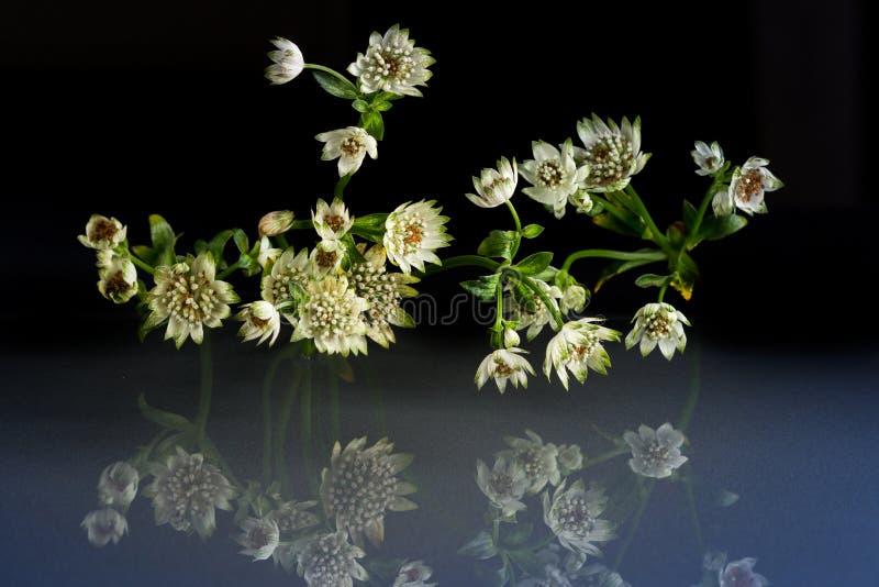 Kwiaty przyrody fantastyczny piękno fotografia royalty free