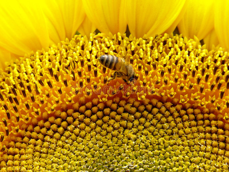 kwiaty pszczoły zdjęcia stock