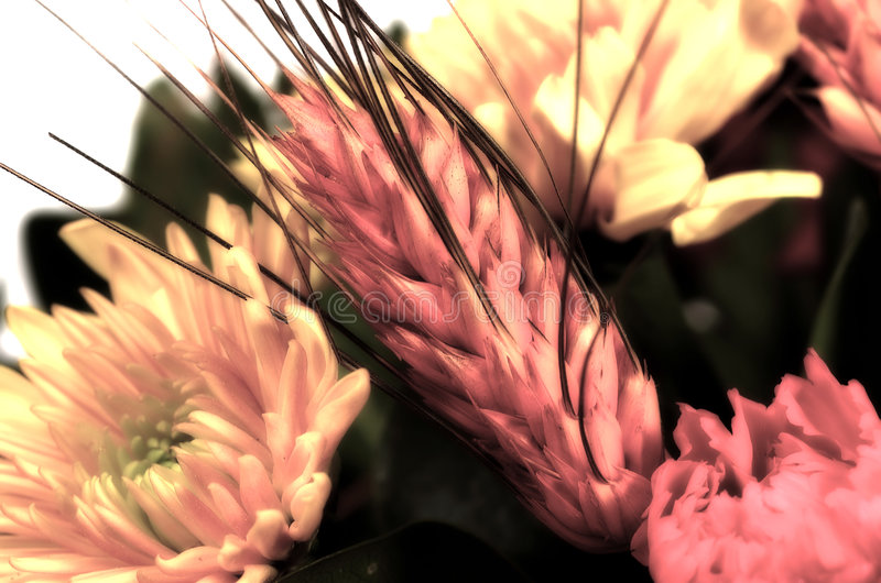 Download Kwiaty pszenicy obraz stock. Obraz złożonej z p, kwiecisty - 44349