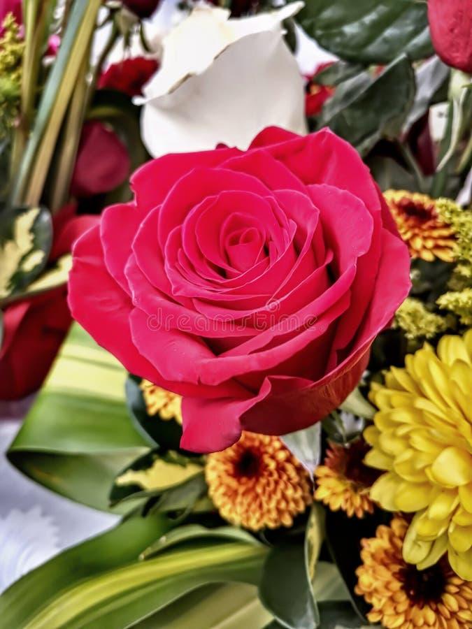 Kwiaty równik obraz royalty free