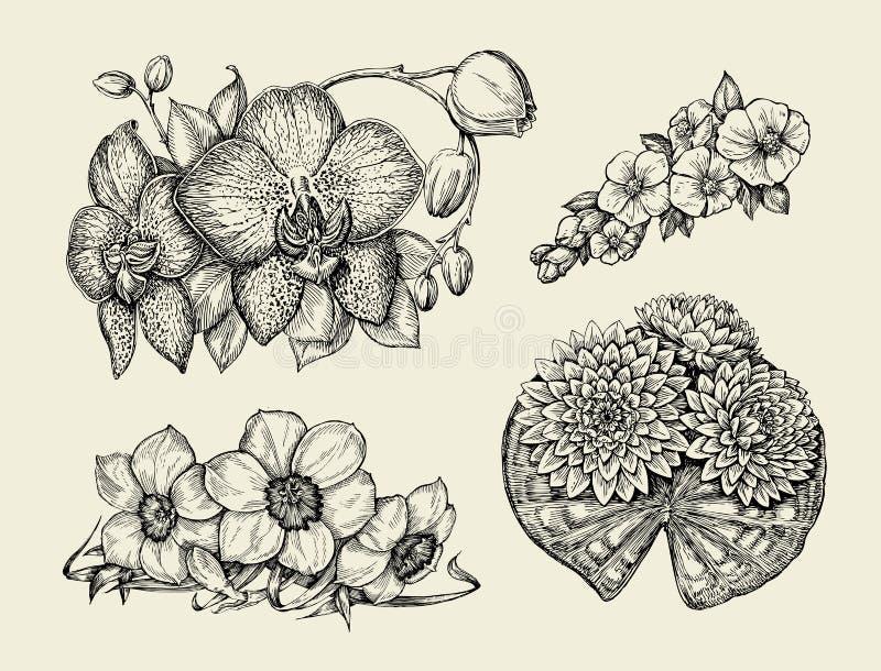 Kwiaty Ręka rysujący nakreślenie kwiatu narcyz, wodna leluja, orchidea, daffodil, jonquil również zwrócić corel ilustracji wektor ilustracja wektor