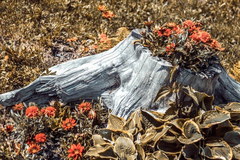 Kwiaty r w konopie Lasowy piękno obraz stock