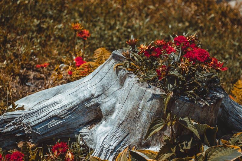 Kwiaty r w konopie Lasowy piękno fotografia stock