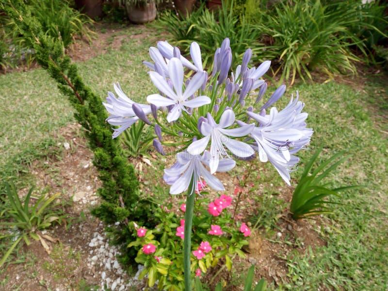 Kwiaty & rośliny zdjęcie royalty free