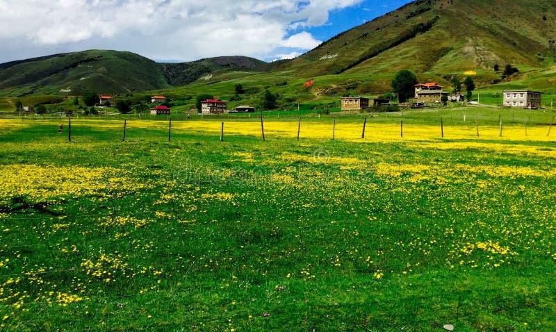 Kwiaty słali łąkę fotografia royalty free