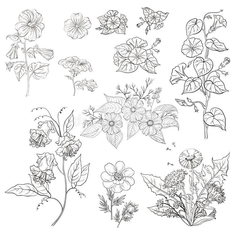 Kwiaty, set, kontur royalty ilustracja