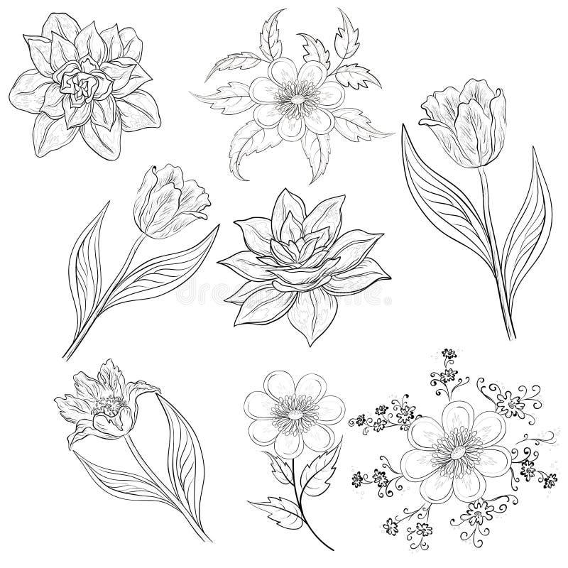 Kwiaty, set, kontur ilustracja wektor