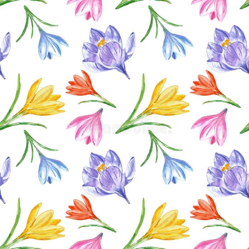 kwiaty tła wiosny Kwiecisty bezszwowy wzór z akwarela krokusami na białym tle Jaskrawy illustratration royalty ilustracja