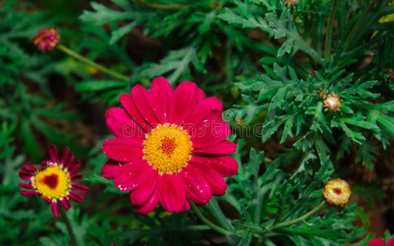 kwiaty tła lato obrazy stock