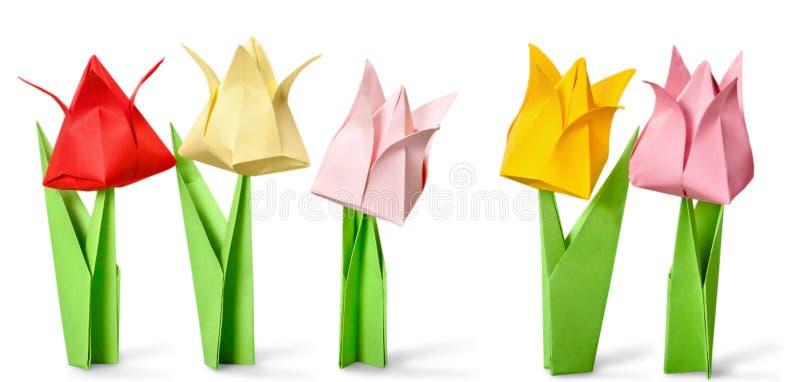 kwiaty tła ogniska origami rząd frontu white obraz royalty free