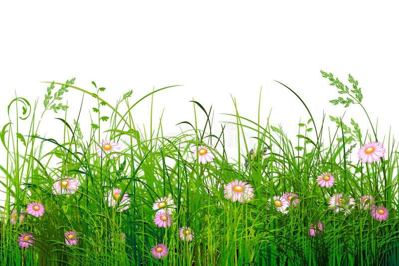 kwiaty trawy green royalty ilustracja