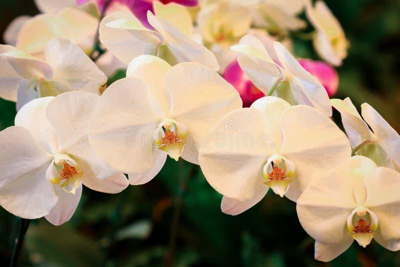 kwiaty trochę zdjęcie stock