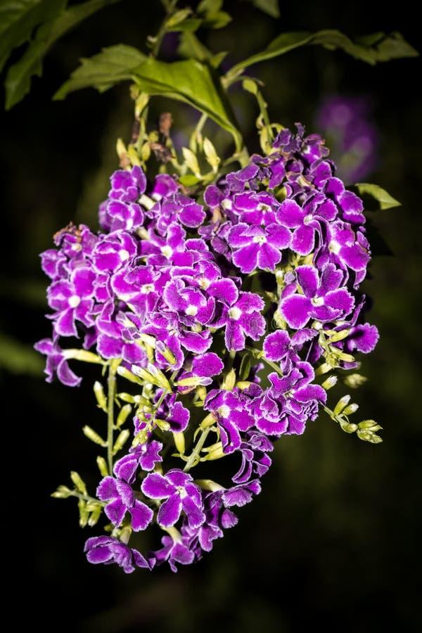 kwiaty trochę zdjęcia stock