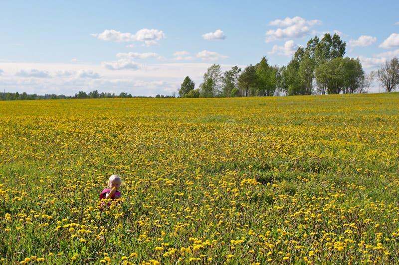 kwiaty trochę dziecko obraz stock