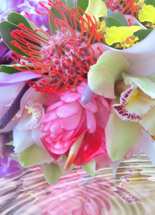 kwiaty tropikalnego zdjęcia stock