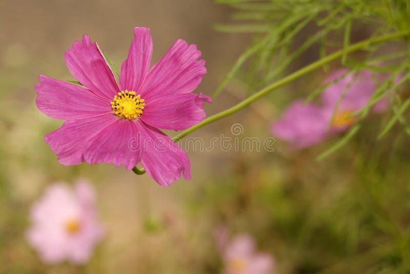 Download Kwiaty tropikalnego zdjęcie stock. Obraz złożonej z kolorowy - 41953284
