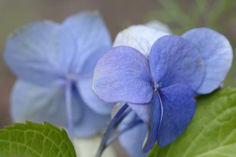 Download Kwiaty tropikalnego zdjęcie stock. Obraz złożonej z sedno - 41953352