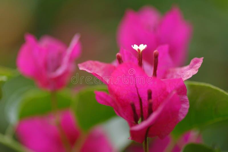 Download Kwiaty tropikalnego zdjęcie stock. Obraz złożonej z tropikalny - 41953636