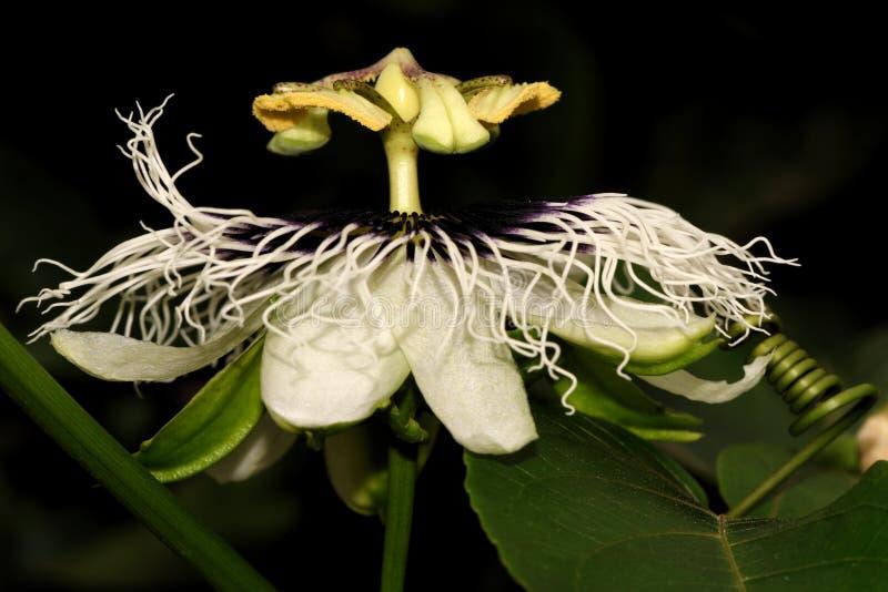 Download Kwiaty tropikalnego zdjęcie stock. Obraz złożonej z liść - 41953688
