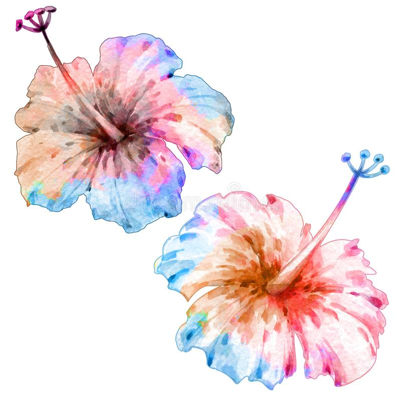 kwiaty tropikalnego banki target2394_1_ kwiatono?nego rzecznego drzew akwareli cewienie Na bia?y tle odosobneni przedmioty royalty ilustracja