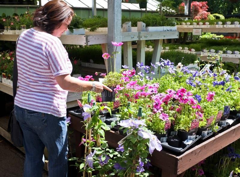 kwiaty uprawiają ogródek zakupy obrazy royalty free