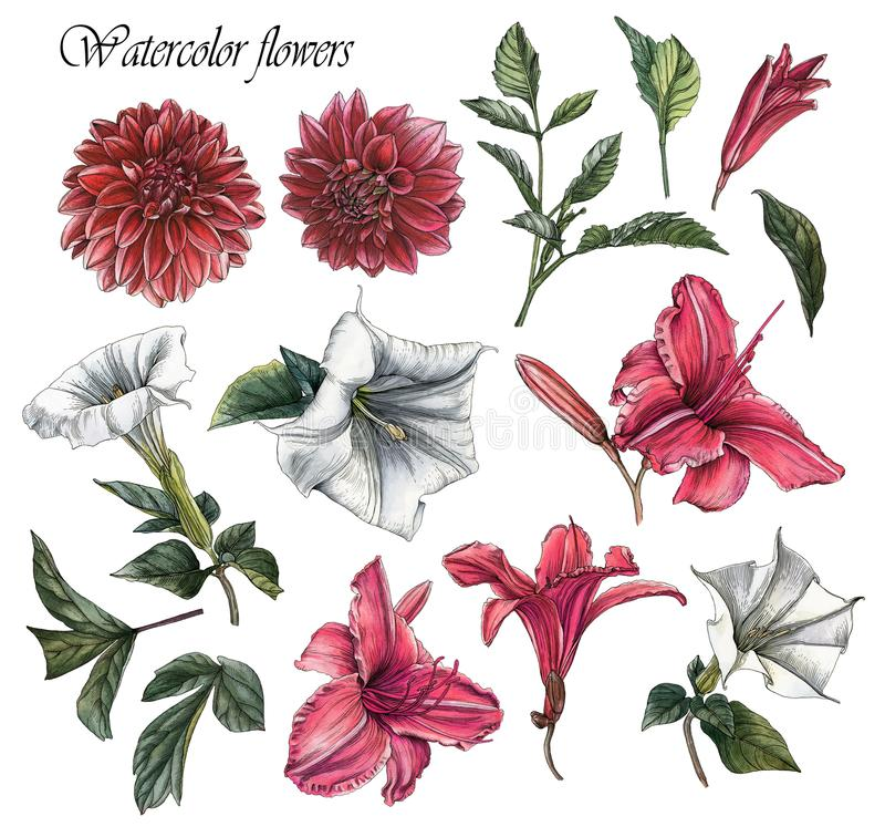 Kwiaty ustawiają akwareli dalie, leluje, datura kwiaty i liście, royalty ilustracja