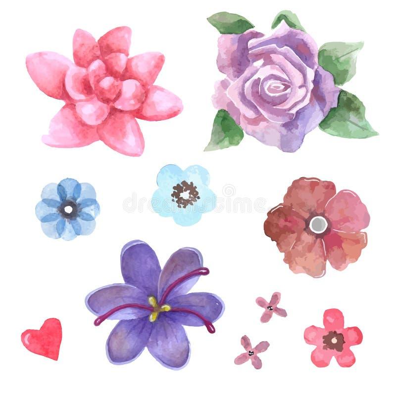 Kwiaty ustawiają watercolour wektory Róże i inny jakby kwiaty royalty ilustracja