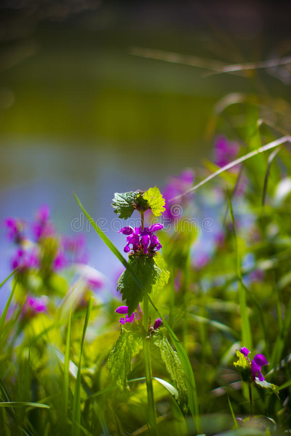 Kwiaty wśród rośliien zdjęcia royalty free