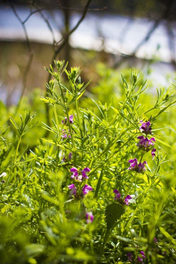 Kwiaty wśród rośliien zdjęcie stock