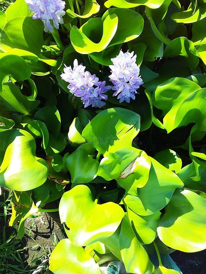 Kwiaty wśrodku Zielonego liścia zdjęcie royalty free