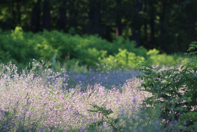 Kwiaty w świetle reflektorów zdjęcie royalty free