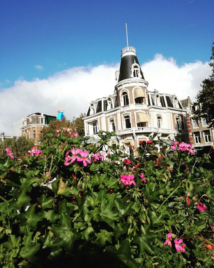 Kwiaty w Amsterdam zdjęcia stock