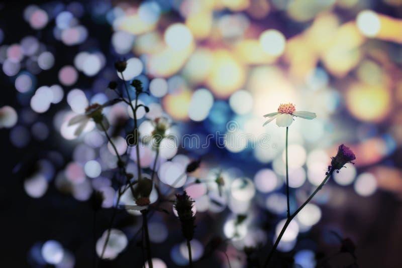 Kwiaty w Bokeh świetle zdjęcia royalty free