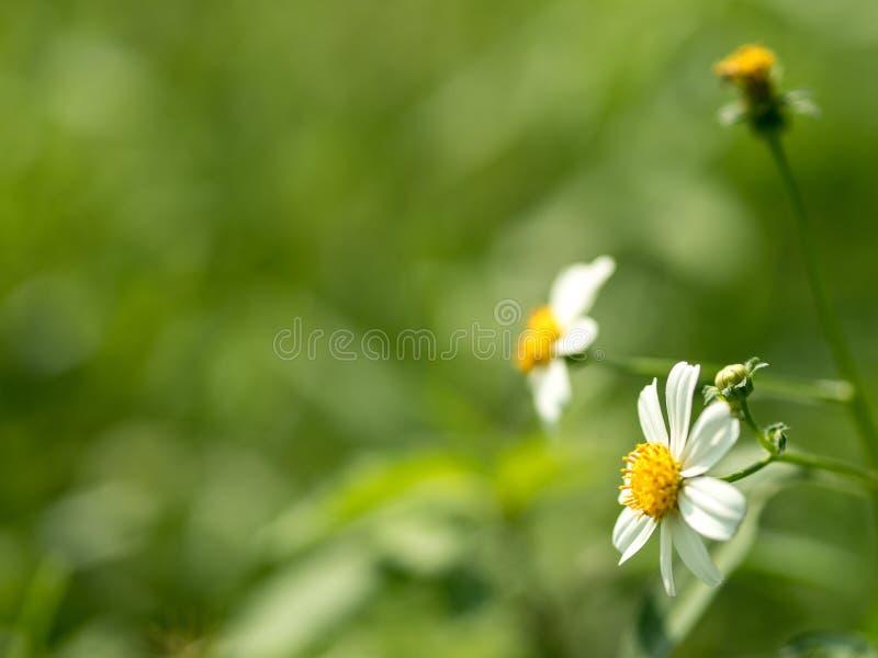 Kwiaty w bujny zieleni łąkach obrazy royalty free