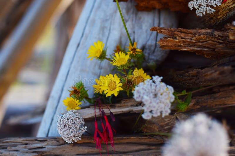 Kwiaty w driftwood obrazy royalty free