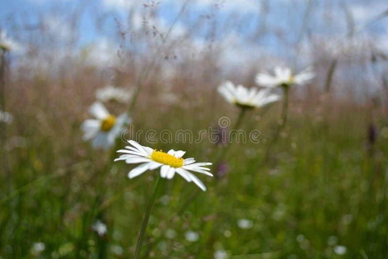 Kwiaty w górze obrazy royalty free