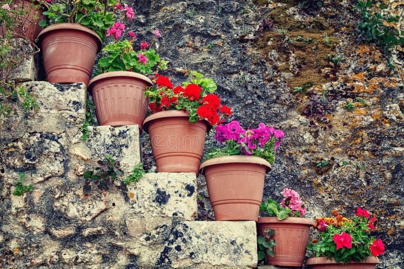 Kwiaty w garnkach obraz royalty free