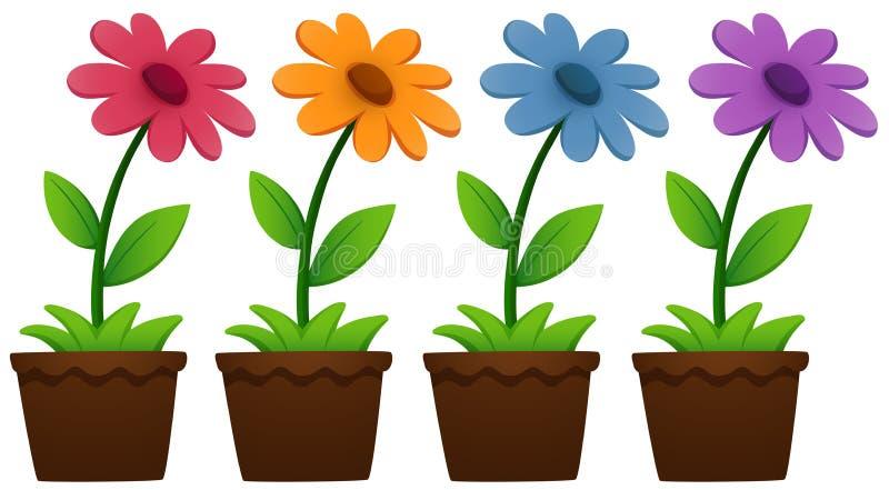 Kwiaty w garnkach na bielu ilustracji
