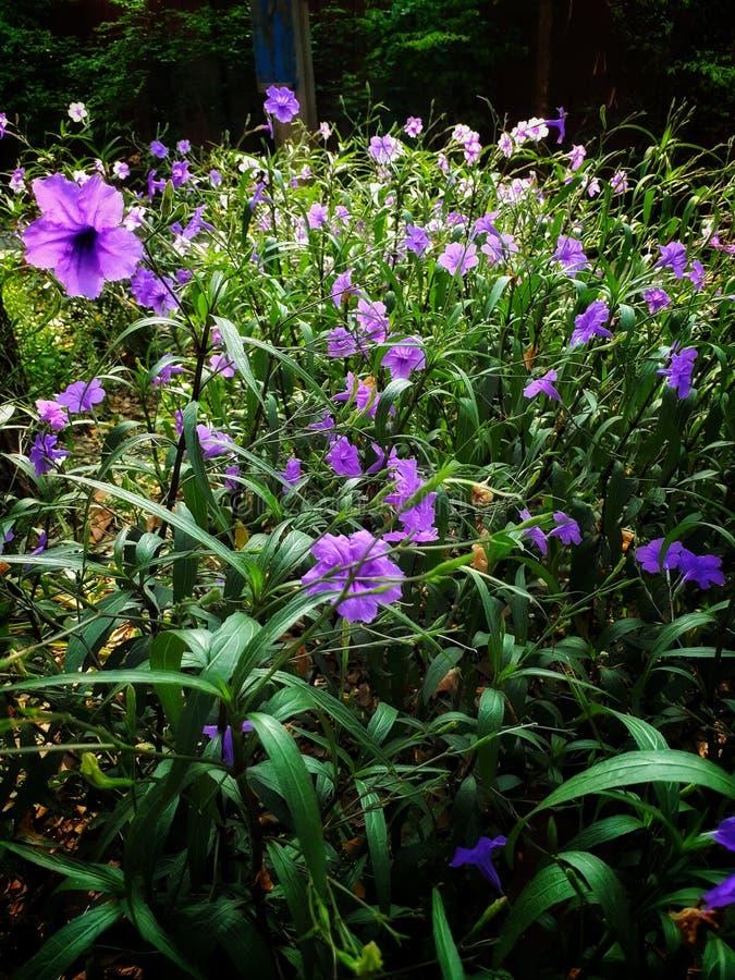 Kwiaty w graden fotografia stock