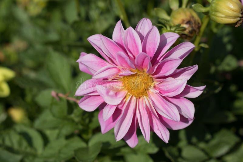 Kwiaty w hiszpańszczyzna ogródzie obrazy stock