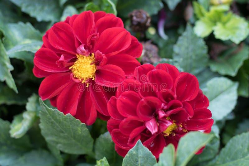 Kwiaty w hiszpańszczyzna ogródzie zdjęcia stock