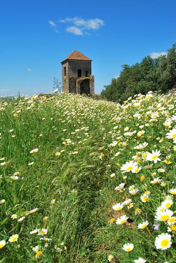 Kwiaty w kasztelu, Montemor o Novo, Portugalia zdjęcie royalty free