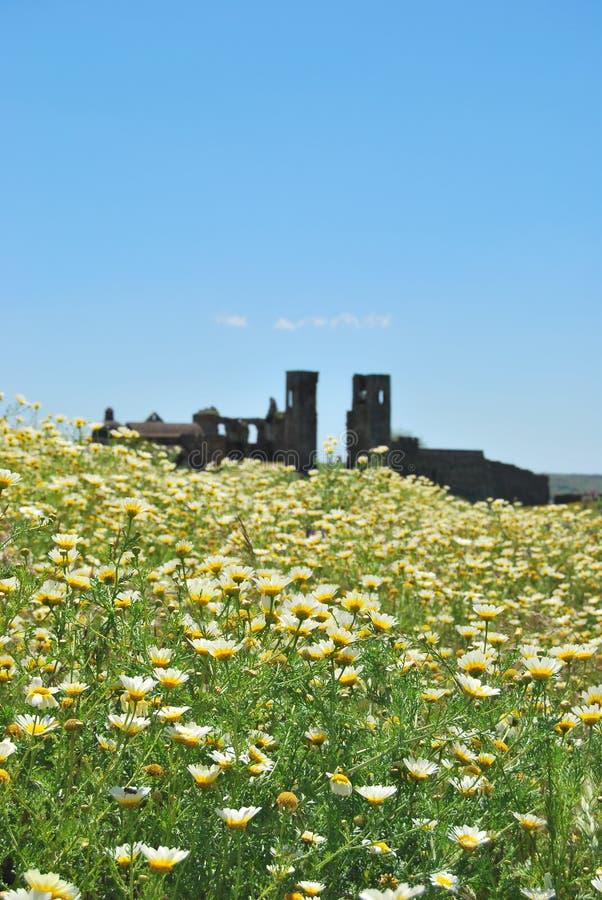 Kwiaty w kasztelu, Montemor o Novo, Portugalia fotografia royalty free